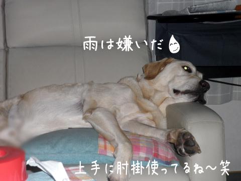maru_20110905213350.jpg