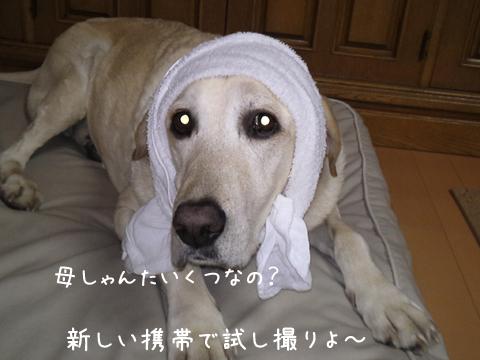 maru_20111004234311.jpg