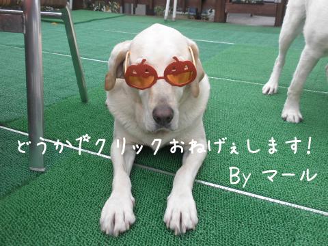 maru_20111016094905.jpg