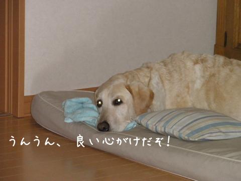 maru_20111101220747.jpg