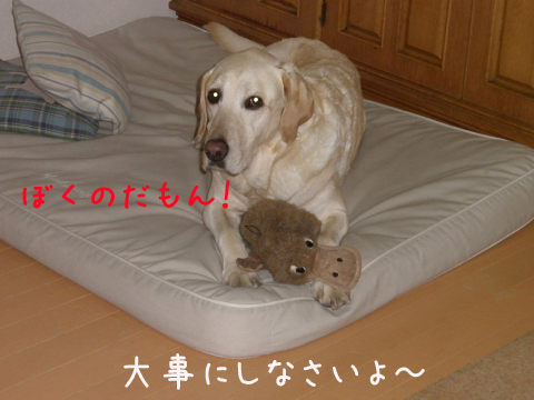 marubed_20110521225611.jpg