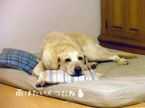 marubed_20111010231544.jpg