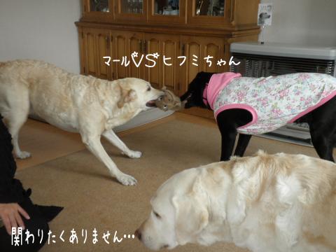 maruhihumi_20110418154608.jpg