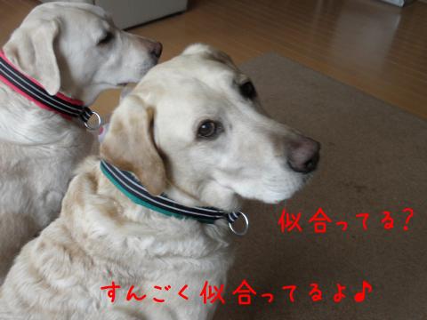 marukubiwa_20110402211421.jpg