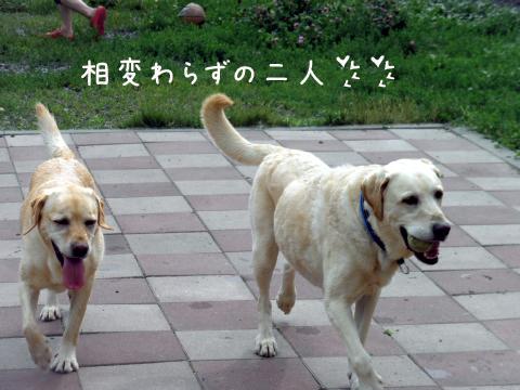 marulee_20110710202829.jpg