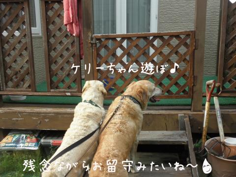 marumax_20110710211009.jpg