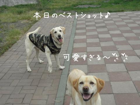 marumenkoi_20110627234111.jpg
