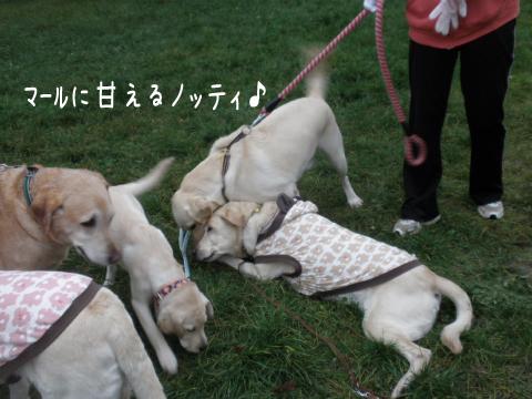 marunotei1_20111015184848.jpg
