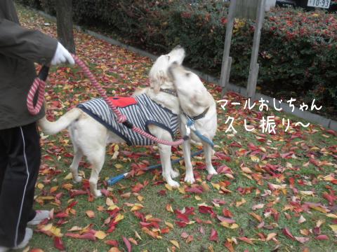 marunotei1_20111024230136.jpg