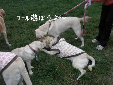 marunotei2_20111015184848.jpg