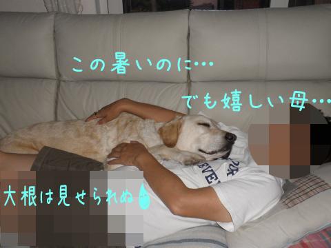 marusofa_20110805212605.jpg