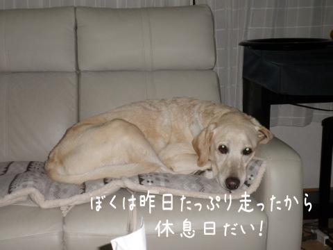 marusofa_20110930222633.jpg