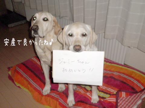 marusyeri_20110623213648.jpg
