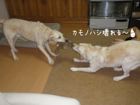marusyeri_20110903221950.jpg