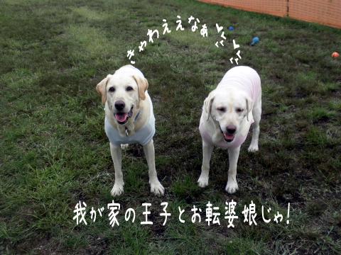 marusyeri_20110908205413.jpg