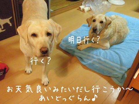 marusyeri_20111109220950.jpg
