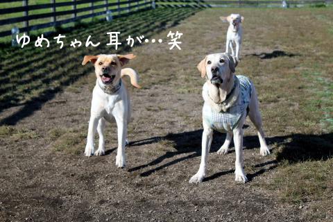 maruyume2_20111020212522.jpg