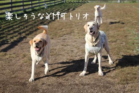 maruyume_20111020212522.jpg
