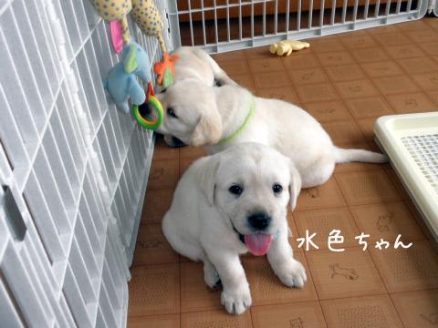 mizuiro1_20110727235559.jpg