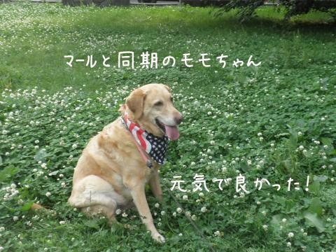 momo_20110710211131.jpg