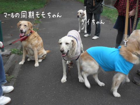 momo_20110923215857.jpg