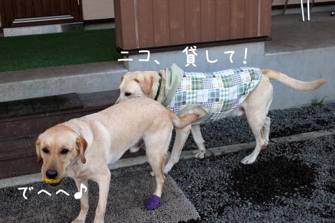 nikomaru1.jpg