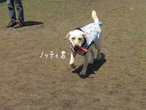 notei_20110505234811.jpg