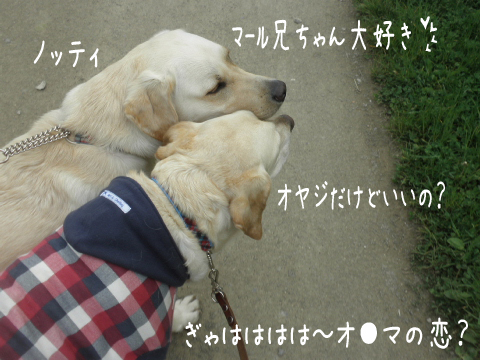 notei_20110607211105.jpg
