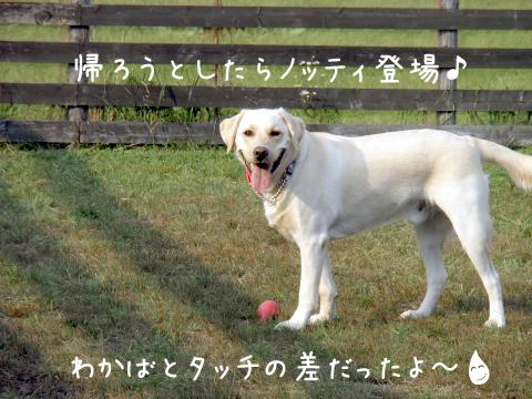 notei_20111013222518.jpg