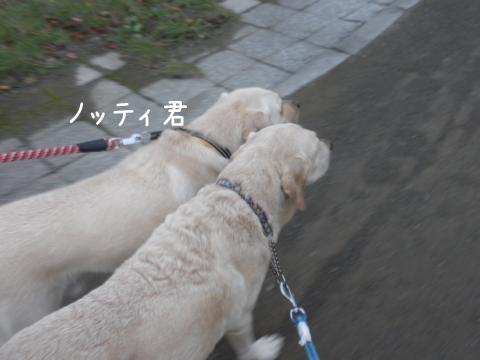 notei_20111016213035.jpg