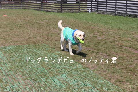 noteihasiru_20110501005909.jpg