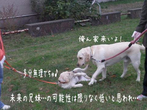 noteiwakaba_20111024225211.jpg
