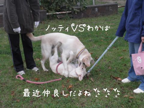 noteiwakaba_20111025225001.jpg