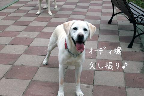 ody_20110911225413.jpg