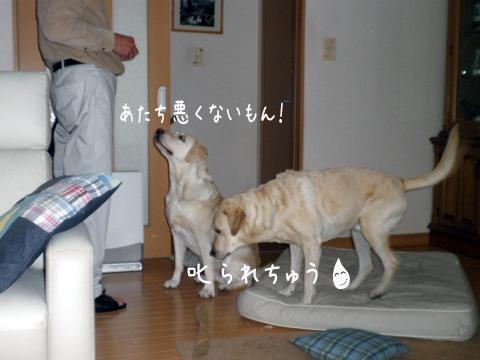 okorareta_20110519183955.jpg