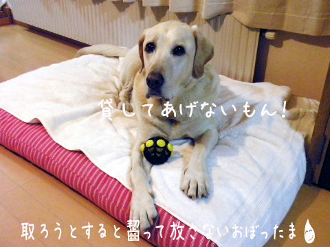 omotya2_20111030225121.jpg