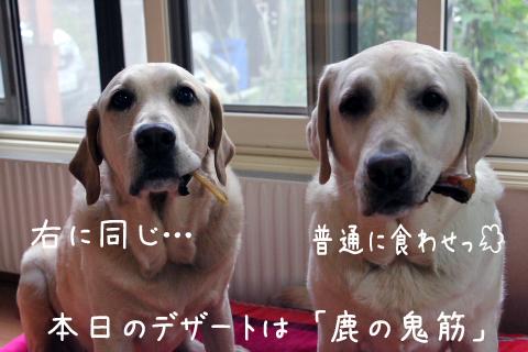 onisuzi.jpg