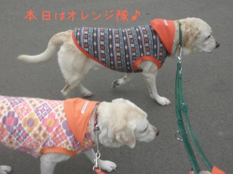 orengi_20110921215354.jpg