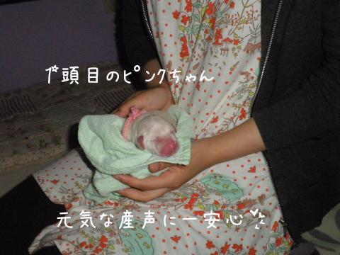 pink_20110623213430.jpg