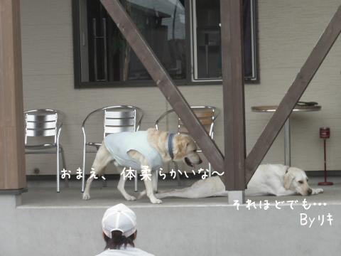 riki_20110908205412.jpg