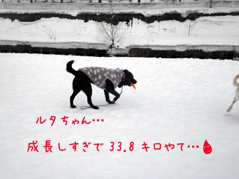 ruta_20110308210841.jpg