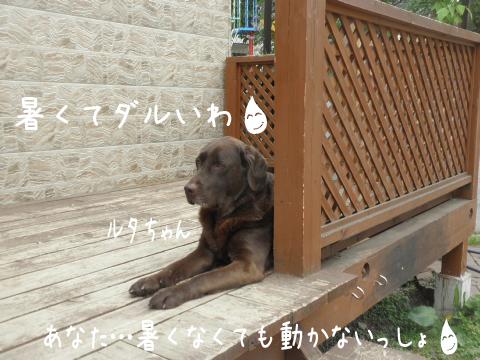 ruta_20110609191213.jpg