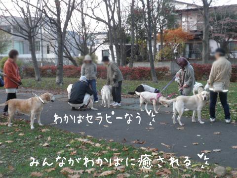 ryokudou_20111113210459.jpg