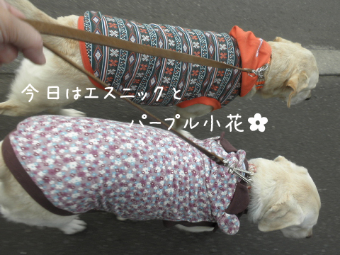 sanpo1_20111014214603.jpg