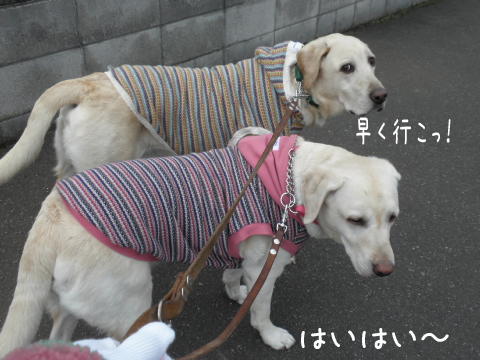 sanpo1_20111109215522.jpg
