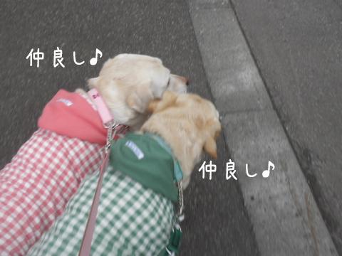 sanpo2_20110415231348.jpg
