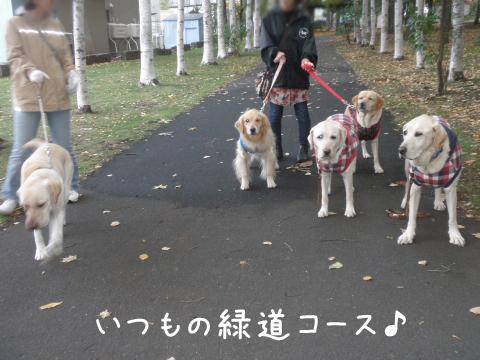 sanpo2_20111018220955.jpg