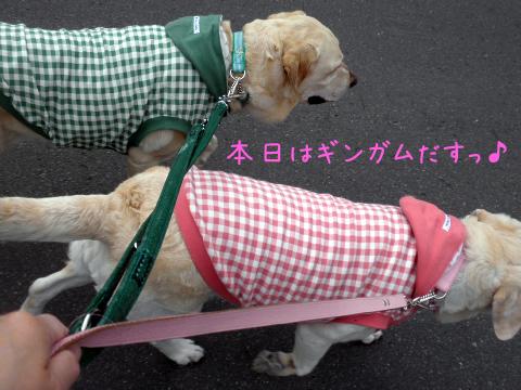 sanpo_20110519183302.jpg