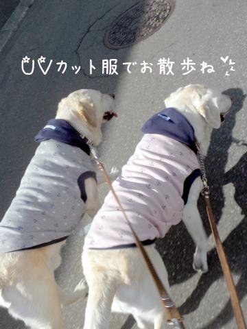 sanpo_20110721215149.jpg