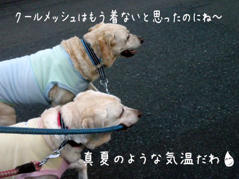 sanpo_20110916213522.jpg